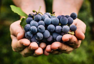 виноград при грудном вскармливании