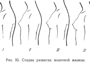 Размеры сисек и сосков у девушек