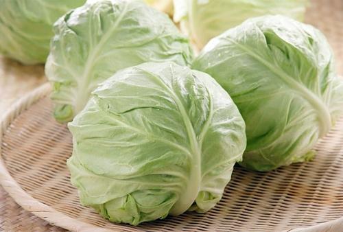 капустный лист от мастопатии