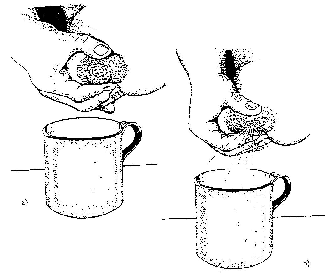 Как сделать чтобы молоко прибывало